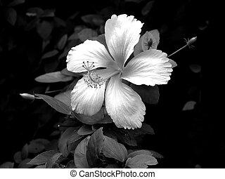 White Flower against Black Background
