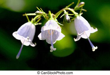 White Flower Bells Small White Bell Shape Wild Flowers
