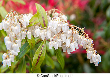 White Flower Bells A Cute Little Flowers In Bell Shape With Its