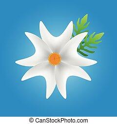 white flower in blue background