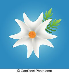 white flower in blue background