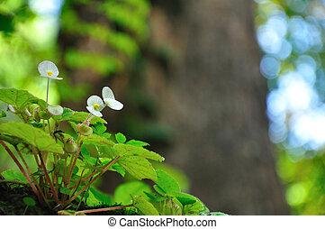 White flower in forest