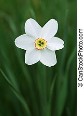 White flower in the garden.