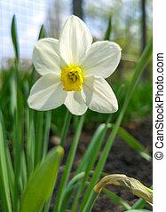 White flower in the spring garden