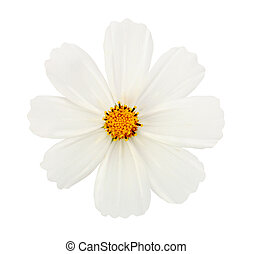 white flower isolated with clipping path