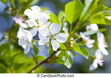 White flower on a tree in a spring garden