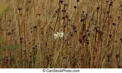 white flower on a yellow field