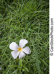 white flower on grass