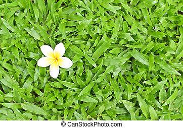 white flower on grass