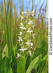 white flower on green field