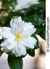 White flower on tree