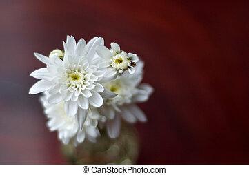 white flower on wood background