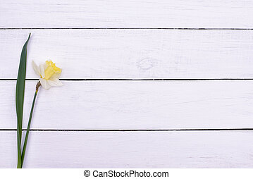 white flower on wooden background top view