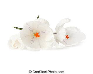 White flower petal and stamen pretty white flower petal and stamen white flower mightylinksfo