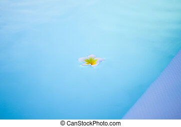 White flower plumer on the surface of the pool.