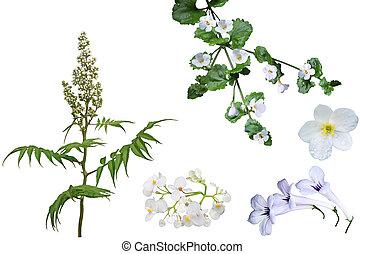 White Flower Set