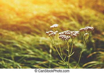 White flower sunset