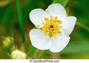 Flower white rose center centre white fragrant beautiful unusual white flower mightylinksfo