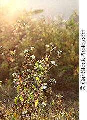White flowers and grasses under sunshine