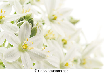 white flowers background - Close-up white flowers background...