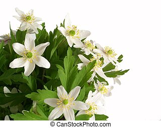 white flowers - flowers