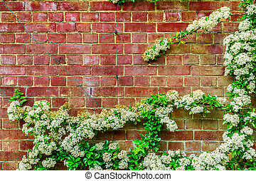 White Flowers Growing on the Wall