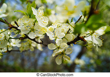 White flowers in a spring garden.