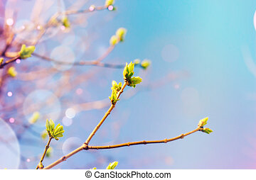White flowers in bloom - abstract spring background
