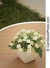 White flowers in pots on the table.