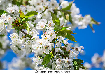 White flowers in sunny day