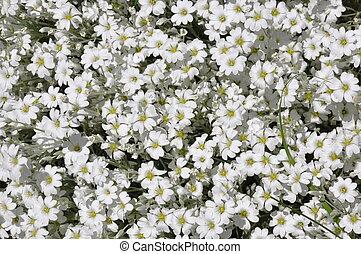 White flowers in the garden
