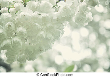 White flowers in the park.