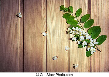 White flowers - locust tree flowers on ash background
