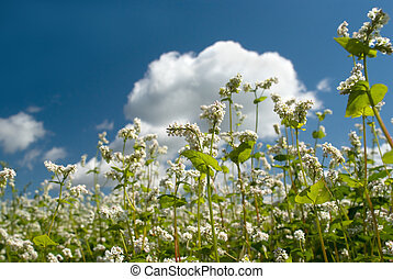 White flowers on a background of blue sky