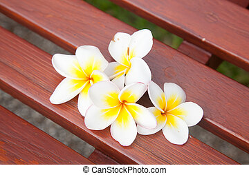 White flowers on a chair.