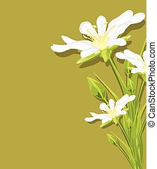 White flowers on a green background