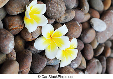 White flowers on a stone