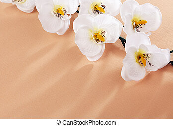 white flowers on beige background - composition of...