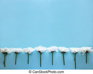 White flowers on blue background