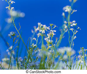 White flowers on blue sky background