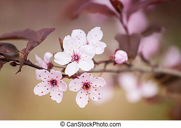 White Flowers on Blurred Abstract Background