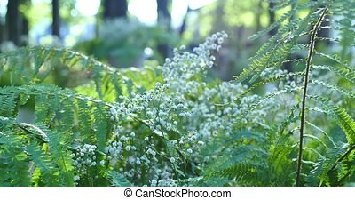 White flowers on green moss with sun light.