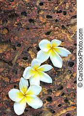 White flowers on the stone floor