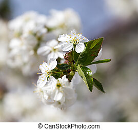 white flowers on the tree in nature
