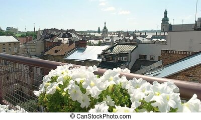 White flowers on town background.