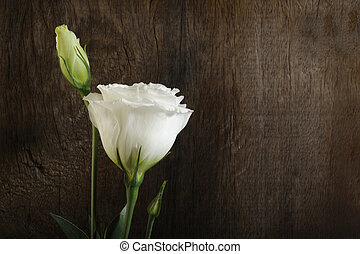 white flowers on wooden background