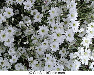 White Flowers Growing