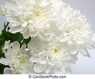 white flowers with leaves green on grey background