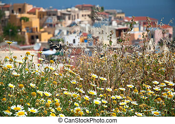 White flowers with Chania town houses in the background
