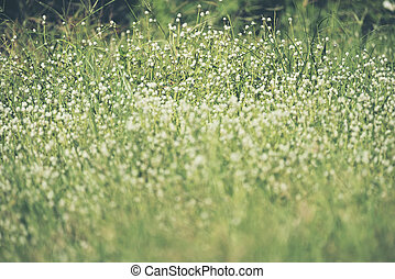 White grass flowers with blurred background white flowers with grass background mightylinksfo